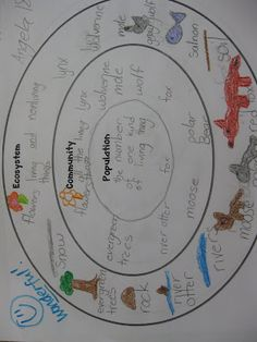 Animal Research Folder: A Fact Finding Mission  We're way into our animal unit and I'm needing to wrap things up and move on. We've spent time learning the words related to this unit and have been reading from nonfiction book and our text books about adaptations, food chains and ecosystems. Here is a triple circle map on the difference betweeen ecosystems, communities and populations.#fortopics
