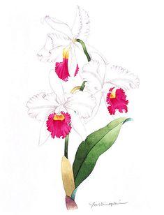 Парад цветов в японских акварелях. Изумительная живопись Ибараги ...