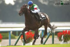 トゥザワールド To The World (JPN) 2011 B.c. (King Kamehameha (JPN)-To The Victory (JPN) by Sunday Silence (USA) 1st Yayoi Sho (JPN-G2,2000m,Nakayama)