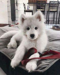 white doggie