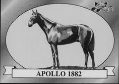 Apollo | Winner of the 8th Kentucky Derby | 1882 | Jockey: B.Hurd | 14-Horse Field | $4,560 prize