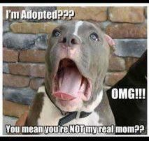 I feel like Callie would have a similar reaction. I'm never telling her she's adopted though.