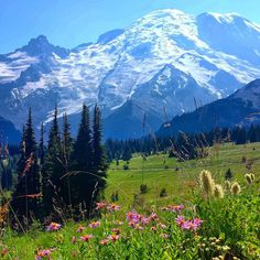 Photo of Mount Rainier National Park - Ashford, WA, United States. Mt. Rainier from the trail to Dege Peak.