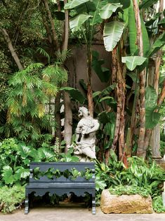 Shapiro also planted exceptional trees and shrubs, including Italian cypress, Ficus nitida, king and queen palms, fragrant Pittosporum, Sche...