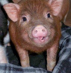 that's a cute piggie!