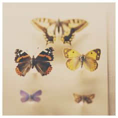butterfly photograph zoology print by sweetdreamsandhoney on Etsy