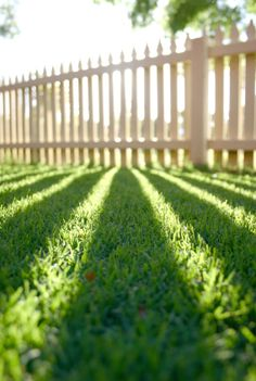 i need to go out and lay in the grass.Seasonal Lawn Care Tips for Summer, Spring Winter & Fall - Scotts Miracle-Gro