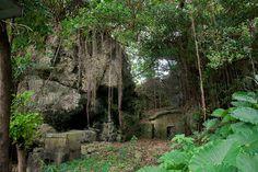 天久緑地の門中墓