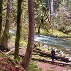 Old Salmon River Trail in Mount Hood National Forest. A short easy and beautiful hike!