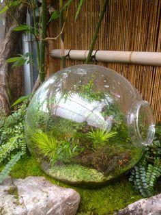 Bamboo Geek Blog at www.bamboogeek.blogspot.com. Mad Man Bamboo Nursery - www.madmanbamboo.com.