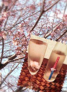 隣の公園の桜が咲き始めました 今は桃が満開❤⃛*:・꒰ ૢඹ௰ ૢඹ✿꒱ 1人でのんびり桜ワイン...あっ工芸茶でなくてすみません( ›◡ु‹ ) ジュースだわwwwけど6%あるからじんわり襲って来る危険なや〜つ くぴくぴやばいな...打ちながら一杯x2と半分 甘いのがお好きな方お勧め〜るです✌ - 71件のもぐもぐ - Cherry blossom wine桜ワイン by Ami