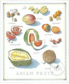 Fruits and Vegetables - John Burgoyne Studio Botanical Drawings, Botanical Illustration, Botanical Prints, Fruit And Veg, Fruits And Vegetables, Sketch Menu, Food Icons, Aesthetic Drawing, Food Facts