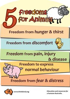 The Five Freedoms for animal welfare, introduced in 1965 in the UK in the Brambell Report on animal cruelty. Eyfs Classroom, Classroom Posters, Classroom Decor, Reading Task Cards, Guided Reading, Close Reading, Whole Body Listening, First Grade Sight Words, Behaviour Chart
