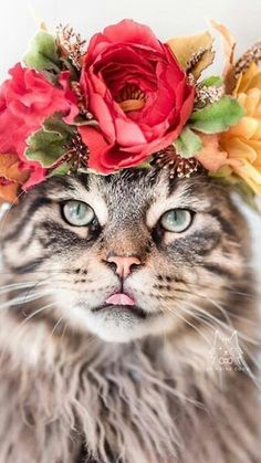 Funny Cats so cute To Make You Smile Cute Cats And Kittens, Cool Cats, Kittens Cutest, Pretty Cats, Beautiful Cats, Animals Beautiful, Cute Baby Animals, Animals And Pets, Funny Animals