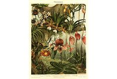 Vibrant and colorful stone chromolithograph illustrating orchid varieties, Great detail. Displayed on a white mat with a gold border and fits a. Orchid Varieties, Jungle Flowers, Vintage Botanical Prints, One Kings Lane, Orchids, Vibrant, Display, Inspiration, Stone
