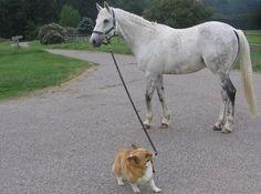 I hope that, inside his head, that dog's singing Amazing Horse...