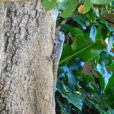 Southern Tree Agama #lizard #kzn #kwazulunatal #southcoastkzn #kznsouthcoast #southportkzn Coast, Instagram, Seaside