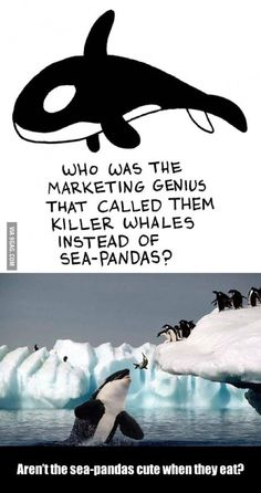 Killer Whales or Sea-Pandas? I still think that they should be called Sea-Pandas