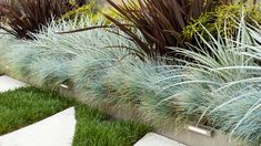 Blue fescue with Puya coerulea, threadleaf nandina, and 'Ever Red' phormium, with incredible grass and hardscape patterning at the base Modern Landscaping, Landscaping Tips, Front Yard Landscaping, Landscape Design, Garden Design, Black Mondo Grass, Blue Fescue, Maine, Evergreen Landscape