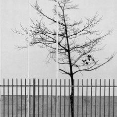 Uma árvore em monocromático.