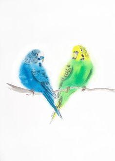 Пару волнистый попугайчик попугай любовь - Живопись птица, птицы, пара, День Святого Валентина