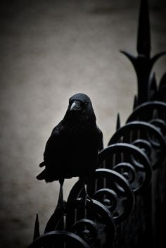 crow on spiral
