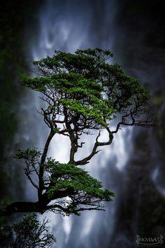 Arthur Pass Waterfall, National Park ~ New Zealand