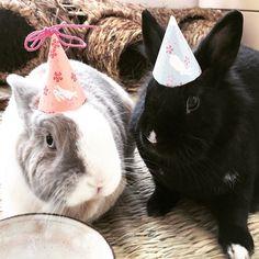 HOPPY PARTY!  Follow Tiffo & Chany on Instagram @tiffoco