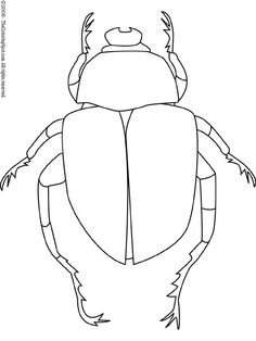 Drawing Of Dung Beetle Clearly Shows Different Body Parts Study For Art Project
