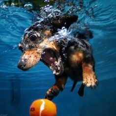 Underwater pup-ography!
