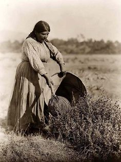 Here for your enjoyment is an absorbing photograph of a Pomo Indian Woman Gathering Seeds. It was created in 1924 by Edward S. Curtis.    The photo illustrates Cecilia Joaquin, a Pomo woman in a full-length portrait, standing and using a seed beater to gather seeds into a burden basket.