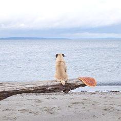 Pug Adventure #pug Adventures