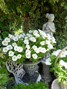 white petunias work best for me in containers