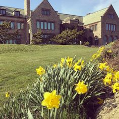 Dont forget - Newport Daffodil Days are almost here! Come to Rough Point with your daffy pin and receive $5 off tour admission from April 15 -23! #floralfriday @newport_daffodillion