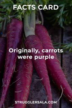Carrot - All the Interesting Information You're Wondering Here Wow Facts, Real Facts, Wtf Fun Facts, True Facts, Interesting Science Facts, Interesting Facts About World, Some Amazing Facts, Unbelievable Facts, General Knowledge Facts