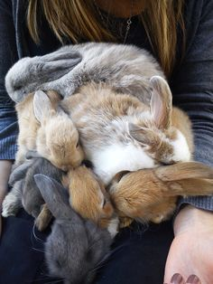 at least seven of these little bunnies...what a pile of sweetness...
