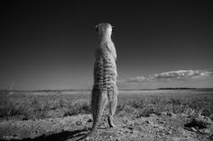 Finalists Of The 2014 Wildlife Photographer Of The Year Competition Will Leave You Wanting More