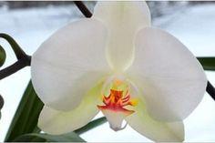 Nápady a Tipy Orchids, Plants