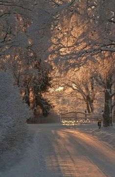 Amazing Winter Wonderland