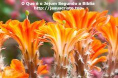 O Que é o Jejum Segundo a Bíblia