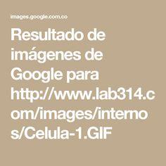 Resultado de imágenes de Google para http://www.lab314.com/images/internos/Celula-1.GIF