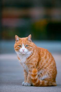 Pics Of Cute Cats, Cute Funny Animals, Pretty Cats, Beautiful Cats, Cat Pose, Orange Cats, Cat Boarding, Cat Photography, Warrior Cats