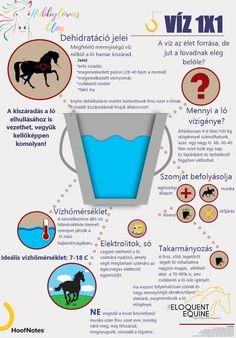 A víz az élet forrása, de jut a lovadnak elég belőle?