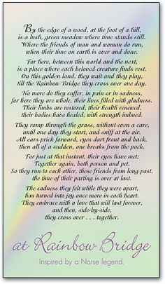 Full Sizes Rainbow Bridges Poems At Rainbow Bridge Personalized Memorial Card by SmartPractice Dog Quotes, Animal Quotes, Qoutes, Animal Poems, Rainbow Bridge Poem, Rainbow Poem, Rainbow Baby, Dog Love, Puppy Love