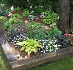 hosta gardening ideas