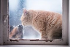 21 Breathtaking Photos Of Animals Looking Through Windows. These Are SPECTACULAR! - LittleThings.com - Amazing Videos, Stories and News from around the world. It's the little things in life that matter the most! - LittleThings.com
