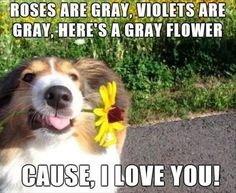 23 Funny Animal Pics for Your Thursday | Love Cute Animals