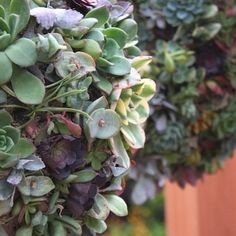Create Major Wow Factor in Your Outdoor Spaces With Succulent Orbs