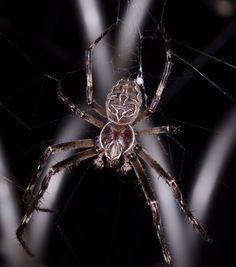 am Spinnen von heini13