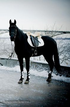 I think black horses just have such a simplicity to them.